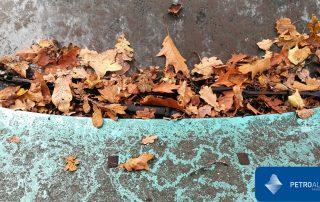 Consejos para que las hojas de los árboles no ensucien los coches en otoño