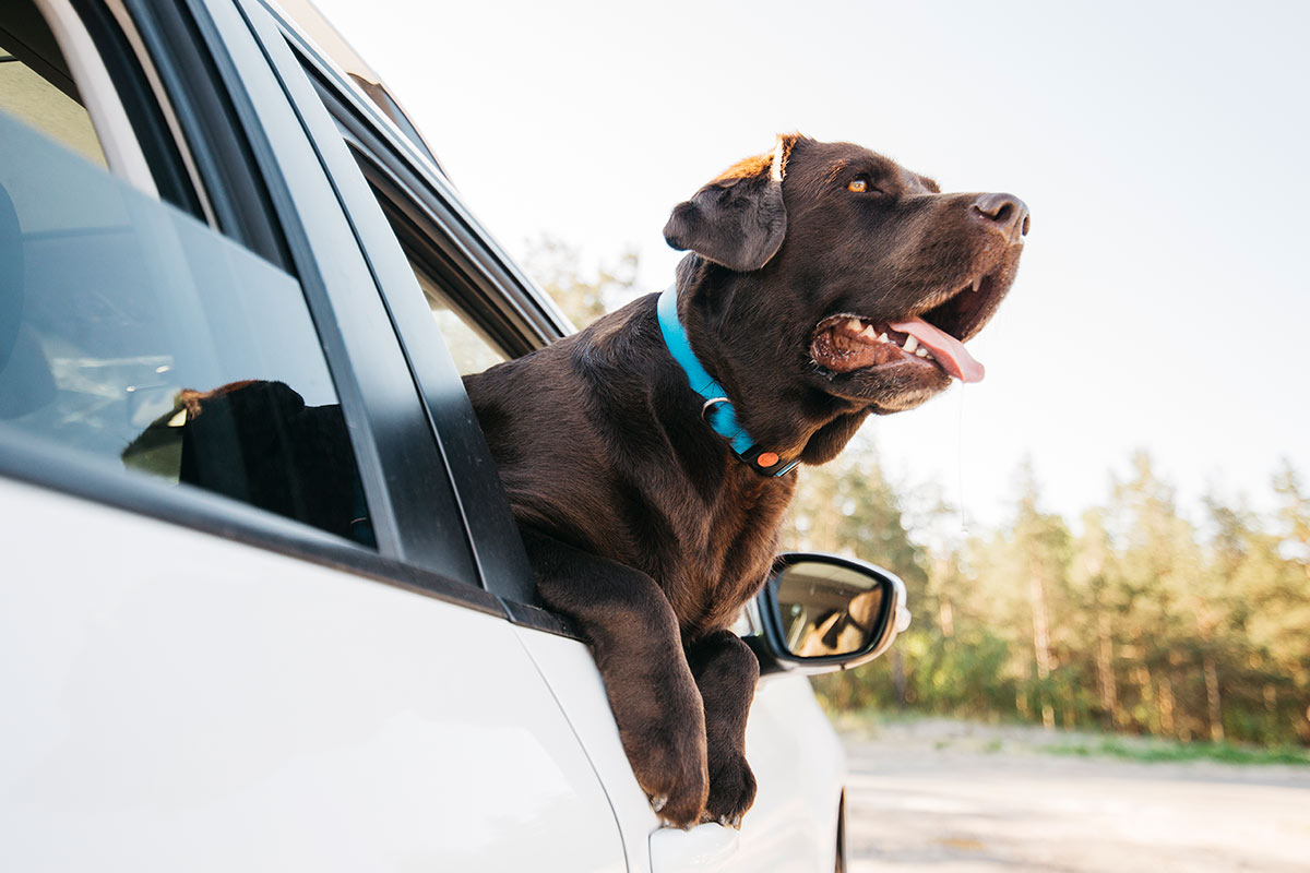 viajar-con-mascotas